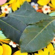Bay Leaves photo